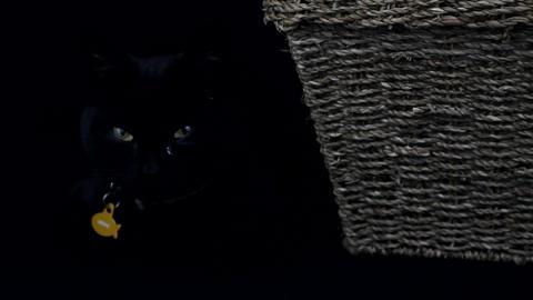 Black Cat Resting stock footage