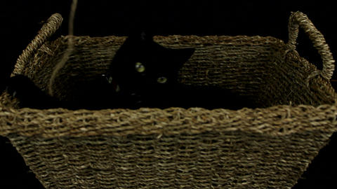Black cat playing with string Footage