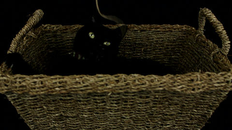 Black cat playing with string Stock Video Footage