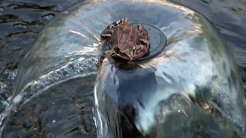 Frog on a fountain Footage