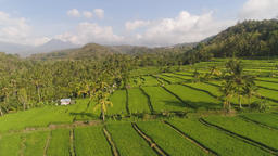 Rice terraces and agricultural land in indonesia Footage
