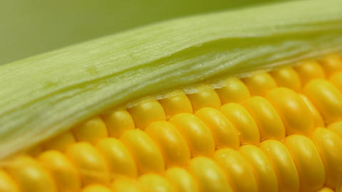 4K Water drop on Fresh ripe peeled sweet corn high vitamin food from nature Live Action
