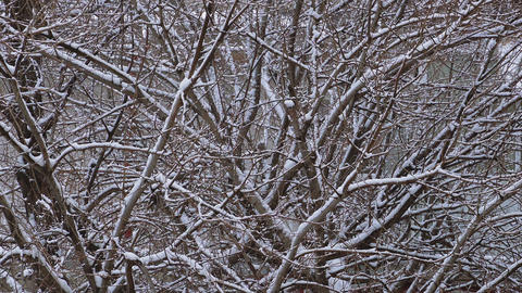 Tree branches with falling snow during winter season cold environment Footage