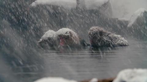 SnowMonkey - Monkey in spa snowy cold day Footage