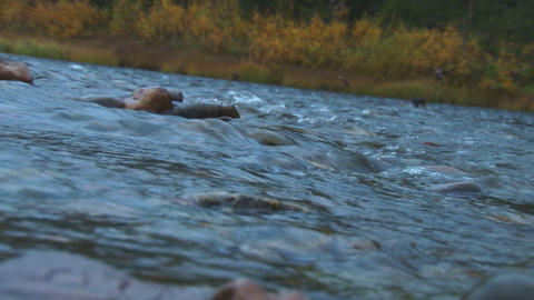 Mountain river in the evening Footage
