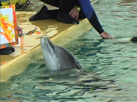 Dolphin draws Footage