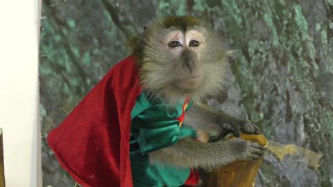 Monkey Javanese Macaque GIF