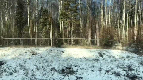 Forest View From Train Window Footage