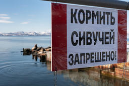 Poster in Russian: It is forbidden to feed Steller's sea lions! フォト