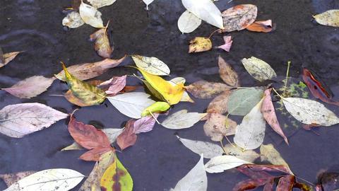 Fallen autumn leaves 영상물