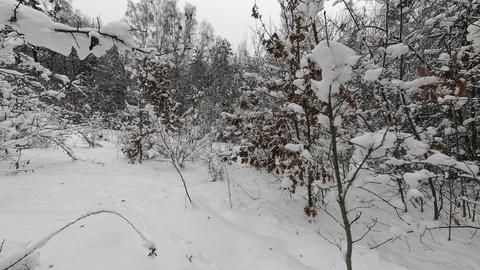 Light snow in winter forest Footage