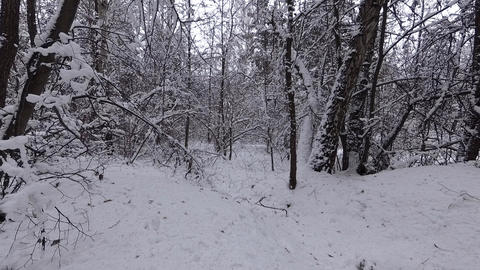 Thick Winter Forest GIF