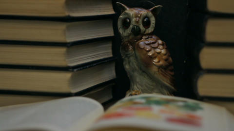Owl among the stacks of books Footage
