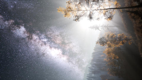 Milky Way stars with moonlight above pine trees forest 영상물