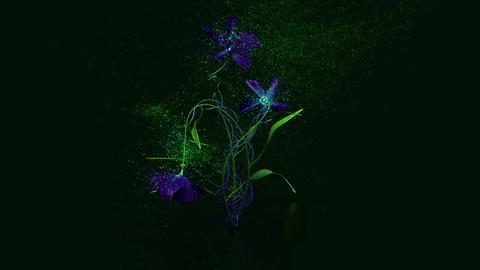 Fantasy flower ビデオ