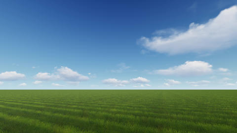 Beautiful green field with bright green grass in beautiful sunny weather Footage