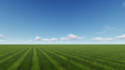 Beautiful green field with bright green grass in beautiful sunny weather Archivo