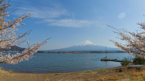 Timelapse of Mount Fuji, Kawaguchiko lake in spring with sakura cherry blossom Footage