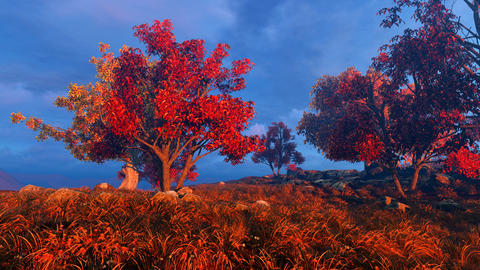 Autumn meadow and trees Animation