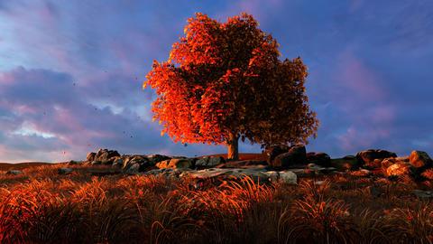 Lonely autumn tree Animation