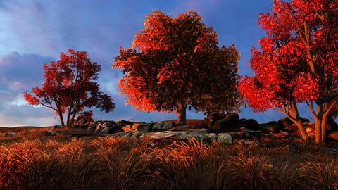Autumn plants on top of a mountain Animation