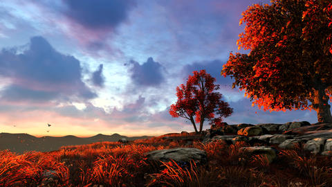 Sunset on top of a mountain covered with forest, Stock Animation