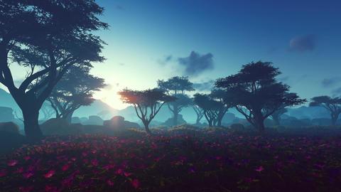 [alt video] Plants In The Savanna