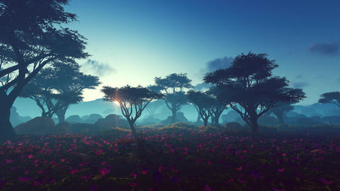 Plants in the savanna Animation