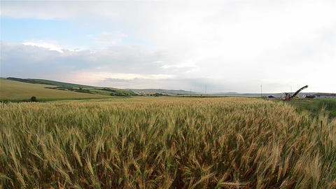 Wheat field now bakebesides a road that is circulating cars 59 Footage