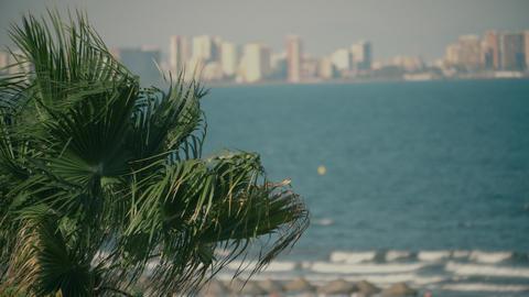 Waving palm tree leaves against sea waves and coastal city skyline Footage