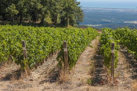 Vineyard structure フォト