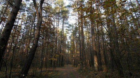 Personal Perspective of Walking on a Path in the Forest, Steady Cam Shot 영상물
