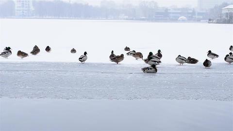 City pond at the beginning of winter ビデオ