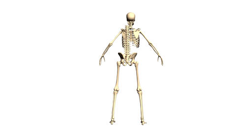 Animated 3D anatomy. Skeleton 3D animation. Time-lapse 3D... Stock Video Footage