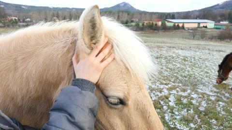 Horses 0