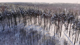 Aerial view: winter forest. Snowy tree branch in a view of the winter forest ビデオ