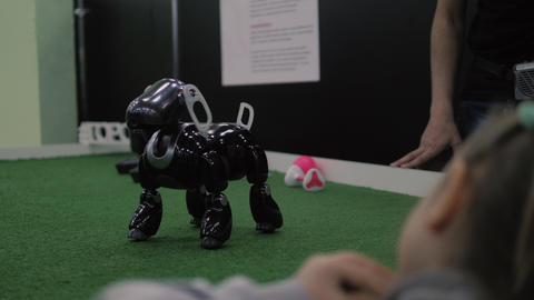 Girl watching at programmed toy dog-robot. Interactive intelligent pet 영상물
