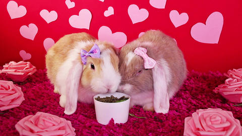 Valentines day valentine s animal pet cute animals pets concept Live Action