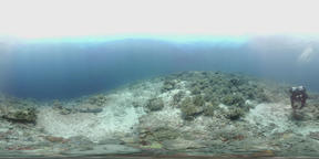 360 vr diver swims on the edge of a coral reef VR 360° Video