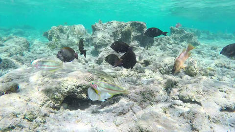Tropical Sea Fishes Underwater Footage