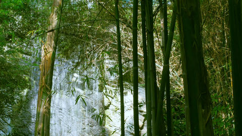 Green Bamboo on Tropical Waterfall Footage
