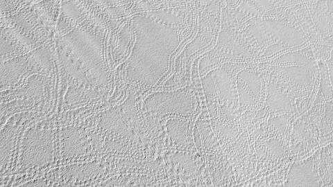 Animal Tracks On Sand Dune At White Sands National Monument GIF