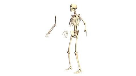 Animated Skeleton Rotating on Black background and Static on White background Animation