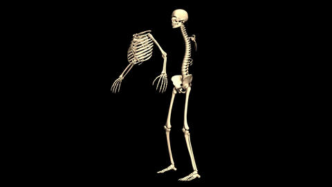 Animated Skeleton Static on Black background and Rotating on Black background Animación