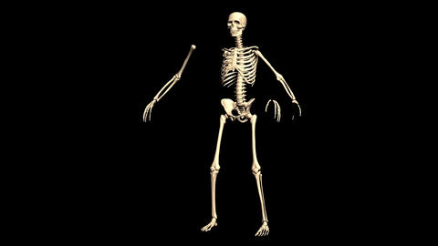 Animated Skeleton Static on Black background and Rotating on Black background Animation