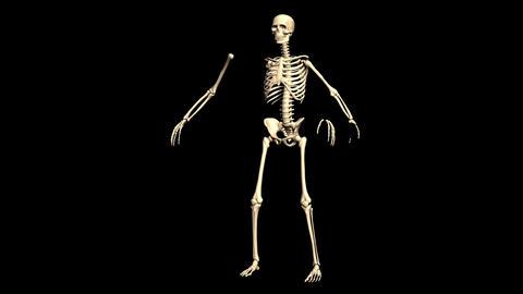 Animated Skeleton Static on Black background and Rotating on Black background Animation