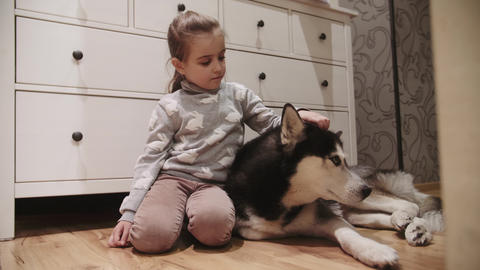 little girl and her black and white siberian husky dog with blue eyes. Girl Footage