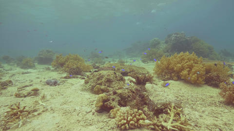 Exotic fish swimming near coral reef on sea bottom.... Stock Video Footage