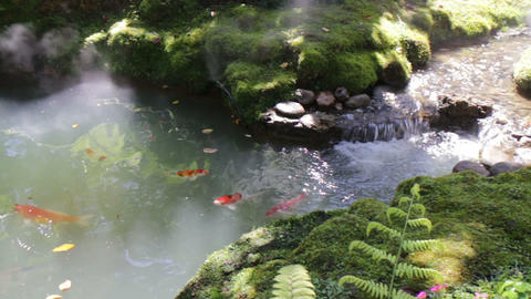 Carp fish pond in minimal green garden Live Action