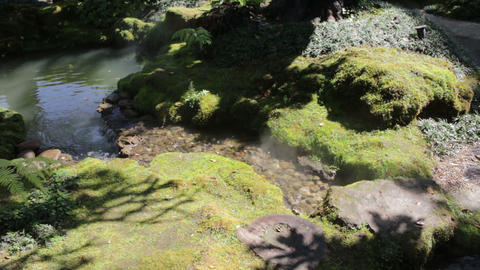Moss covered rock in display garden Footage
